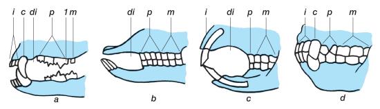 koera hambad