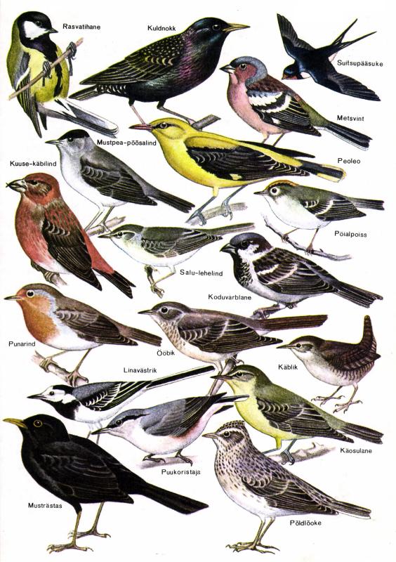 File:linnud.png