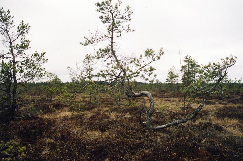 File:Pärnumaa_Soomaa3.jpg