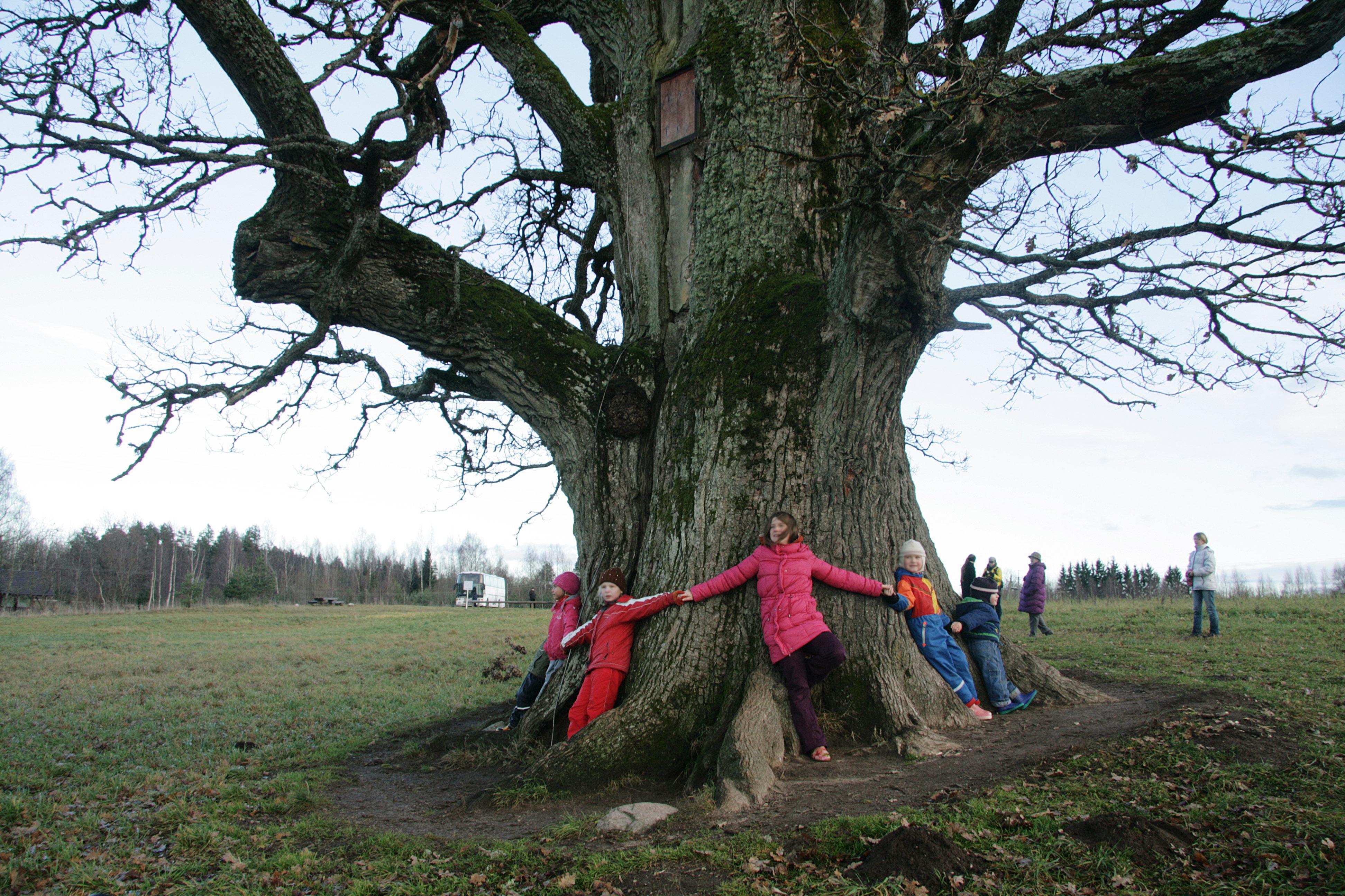 puuliigid eestis